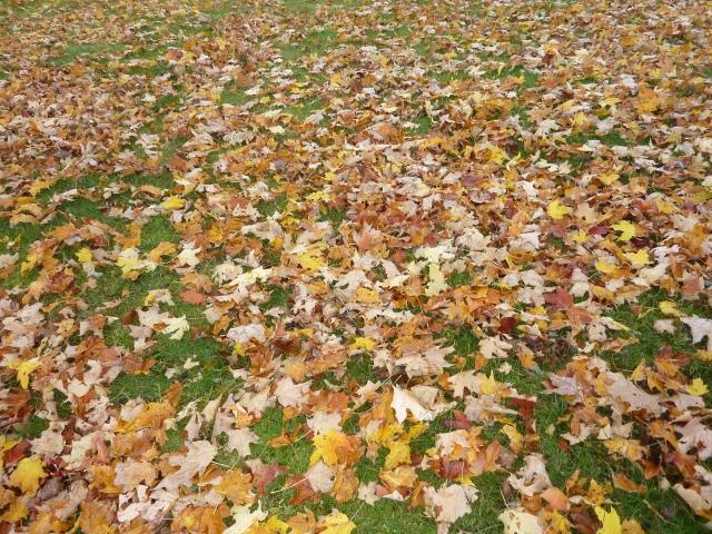 leaf_carpetJaneHanser